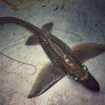مخلوقات عجیب و ترسناک اعماق دریا+تصویر