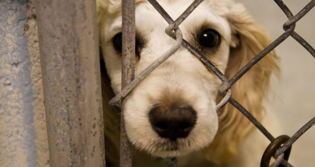 چه مجازاتی در انتظار حیوان آزارها است؟