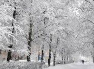 بارش سنگین برف در کانادا + فیلم
