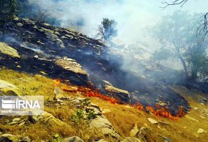 تخصیص بودجه برای جنگلهای زاگرس+ عکس