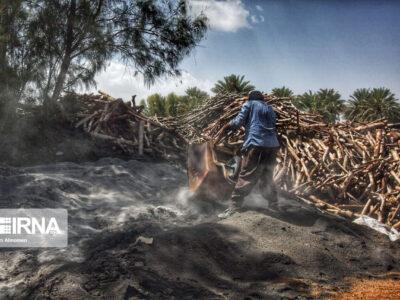 تهیه زغال تهدیدی برای محیط زیست