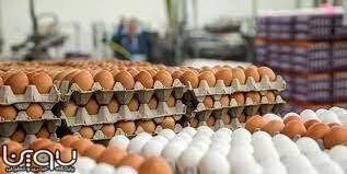 عرضه تخم مرغ با نرخ جدید